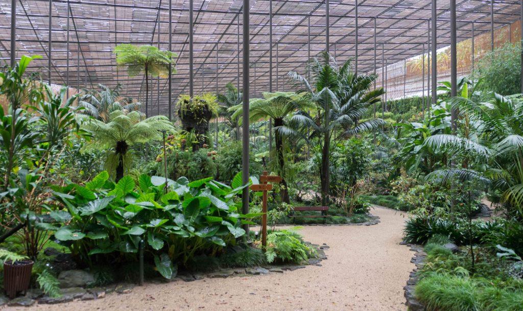 As Plantas da Estufa Fria comem-se?
