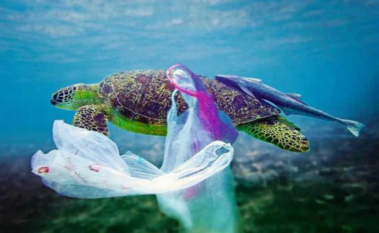 Ocean Plastics Lab