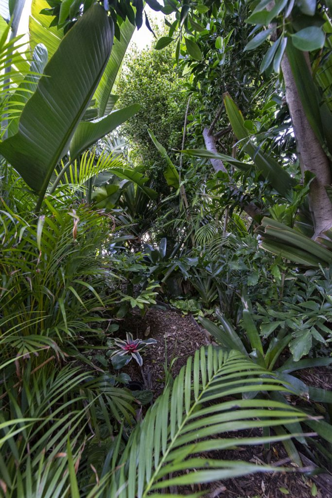 Jardim de Exóticas Tropicais  | Travessa das Terras do Monte 1