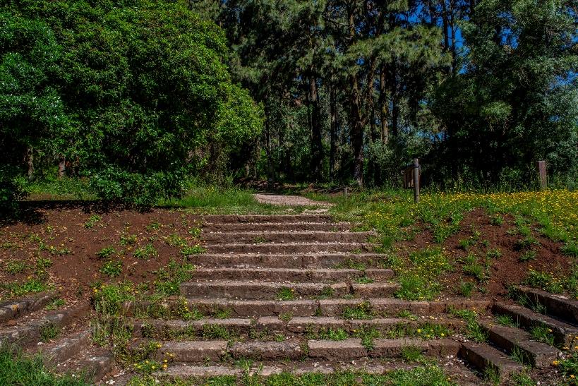 Forest Park Monsanto