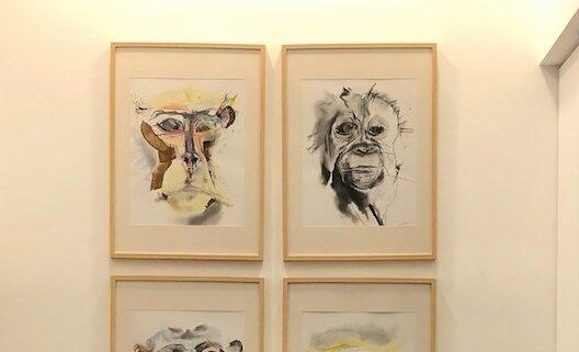 Como Imaginas um Macaco Curioso?