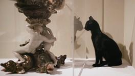 As Sete Vidas de um Gato